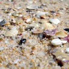 Merimbula Beach (sand and shells)