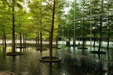 Fountain Place by Dan Kiley